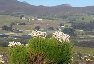 Semester at Sea Ruminations: South Africa Day 4: Fynbos!