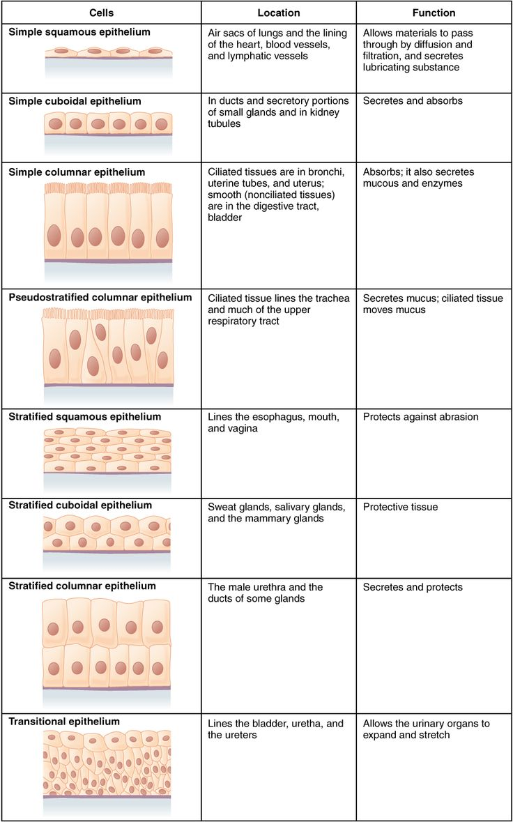 423_Table_04_02_Summary_of_Epithelial_Tissue_CellsN.jpg (937×1502) #OR #anatomy #surgicaltech