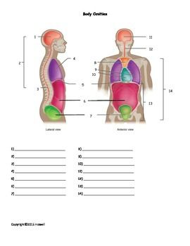 Body Cavities Quiz or Worksheet Medical terminology