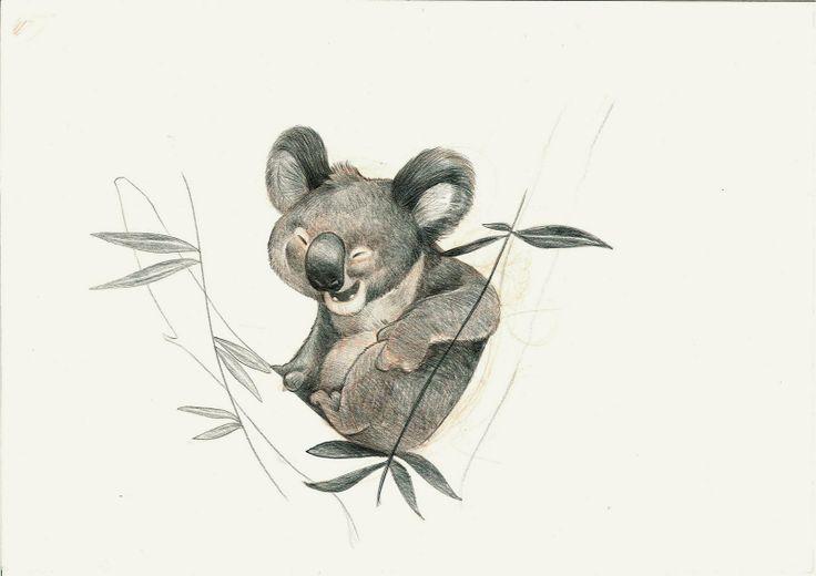 Qstom | Koala