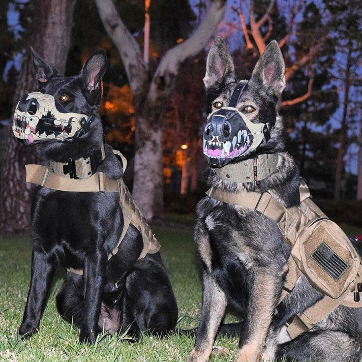 K9 officers in their new painted muzzled. Bad Ass K9 Officers.