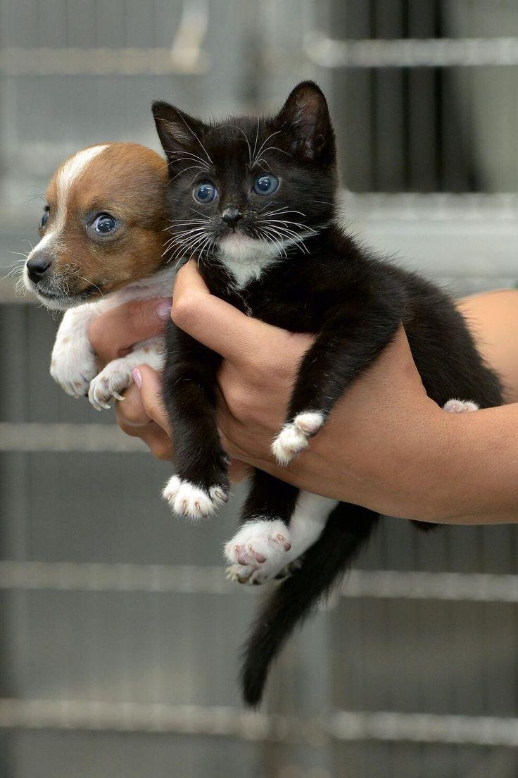 So sweet kitten & puppy