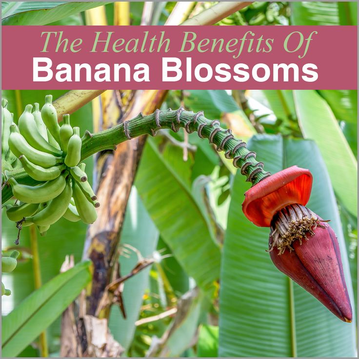 Check Out For Incredible Health #Benefits Of #BananaBlossoms