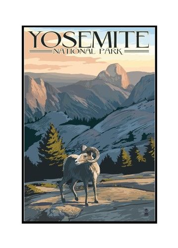 Yosemite National Park, California - Big Horn Sheep - Lantern Press Artwork (12x18 Framed Gallery Wrapped Stretched Canvas), Multi