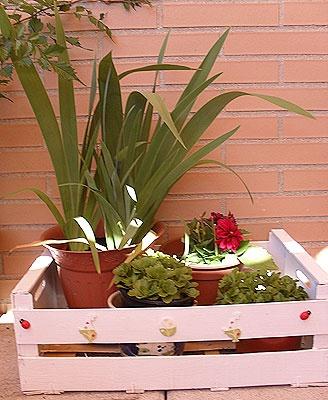 Tutorial DIY: Maceteros con cajas de frutas