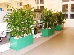 Green Planter box by Paul Pph on 500px#planthire #sydney #plantrental #indoorplanthire #officeplanthire