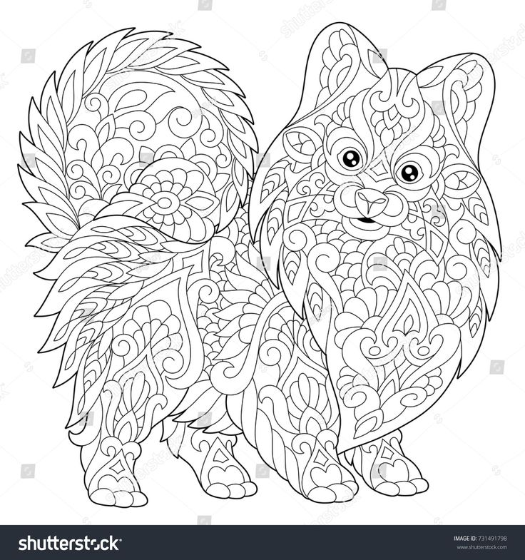 Coloring Page Of Pomeranian Dog Symbol Of 2018 Chinese