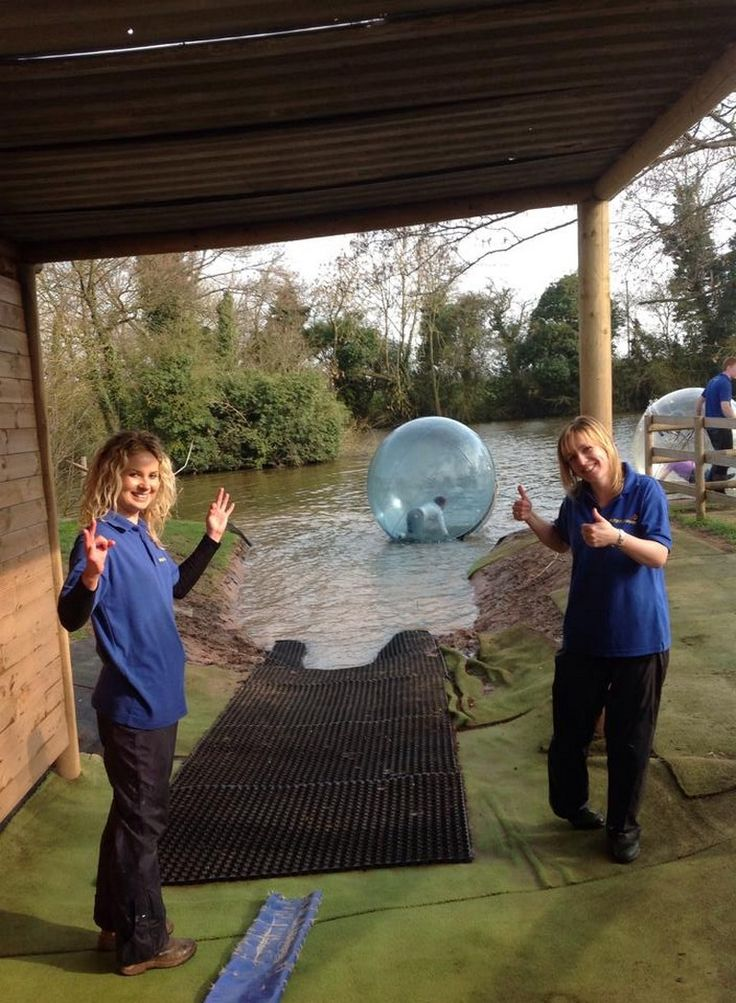 Waterzorb and Landzorb parties and events