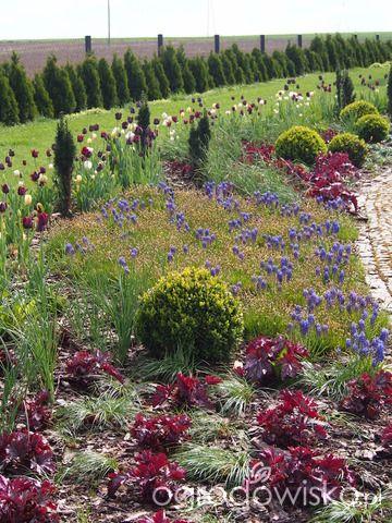 Marzenia i plany vs. rzeczywistość - strona 279 - Forum ogrodnicze - Ogrodowisko