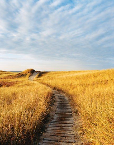 Dunes play a vital role in stabilizing beaches that are battered by winter storms. Here, at Aquinna, on Martha's Vineyard, they form the timeless frame of American seascape #iwanttogo