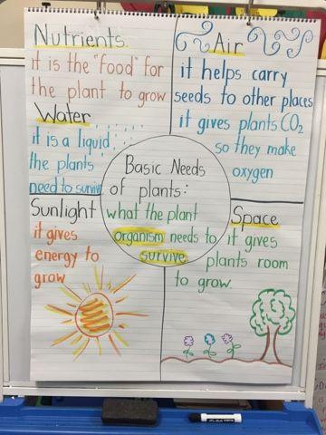 Basic Needs of Plants Ms. Hernandez' 2nd Grade Blog