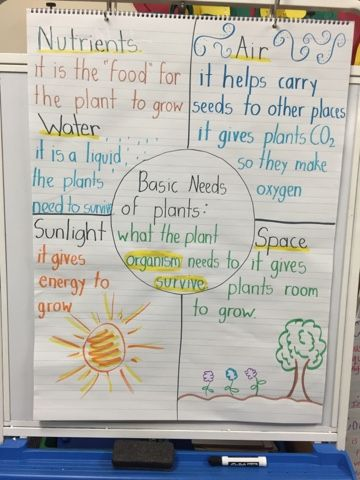 Basic Needs of Plants Ms. Hernandez' 2nd Grade Blog