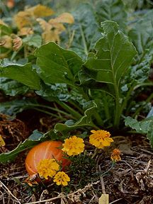 The Synergistic Garden  Emilia Hazelip - great article on autofertilization gardening