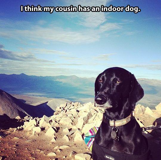 Disinterested dog (me. in dog form.)