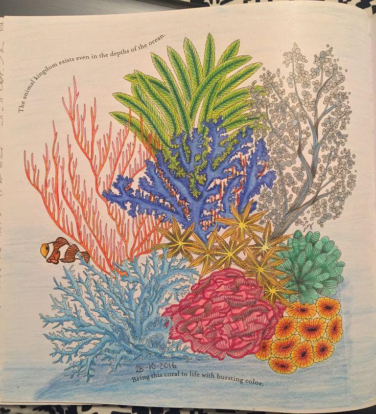 Animal Kingdom Millie Marotta Colouring Book Adult Reefs Ocean