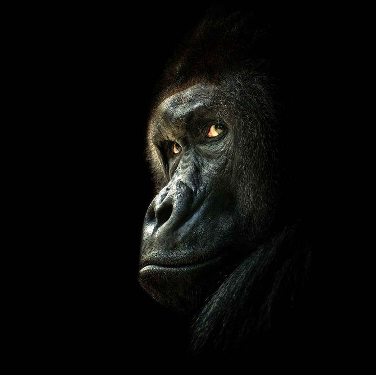 Les+animaux+de+2015                                                                                                                                                                                 Plus
