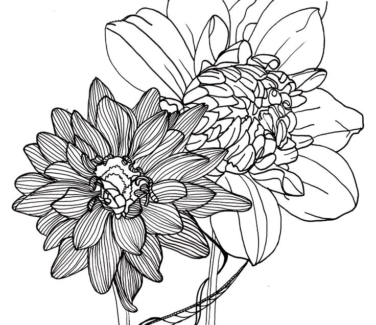 Flower Plant Line Drawing : Line drawing flowers dahlias flower power