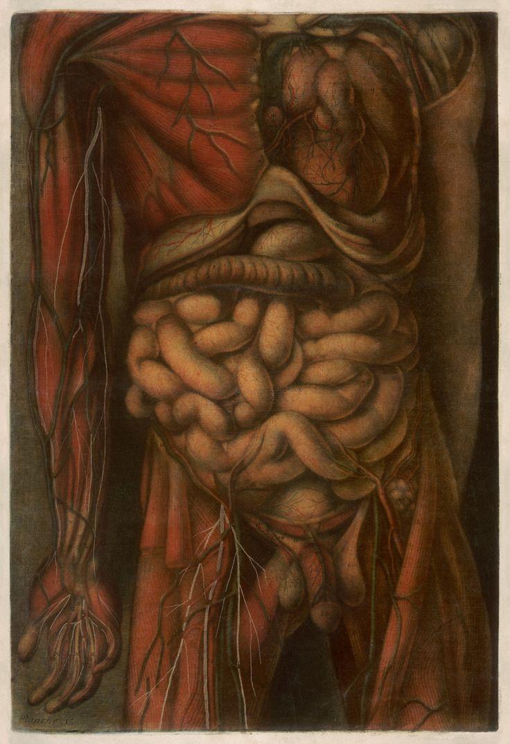 """Tableau V from """"Anatomie générale des viscères en situation, de grandeur et couleur naturelle, avec l'angeologie, et la nevrologie de chaque partie du corps humain"""" by Jacques Fabien Gautier d'Agoty, 1752 (pinterest.com/pin/287386019946927282/)."""