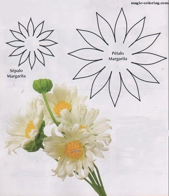 MAGIC-COLORING   Matricaria (chamomile, daisy) flower template