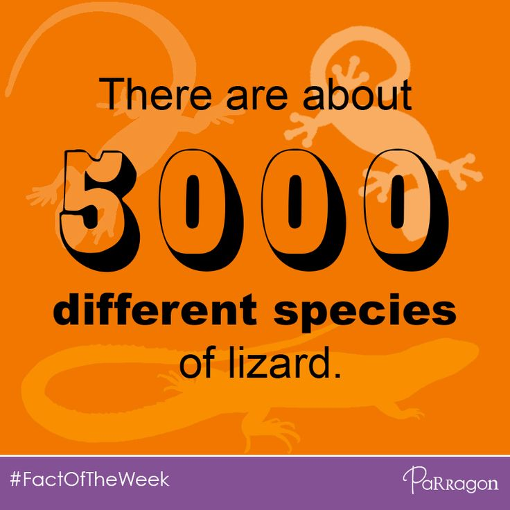 Did you know... There are about 5,000 different species of lizard! #FactOfTheWeek