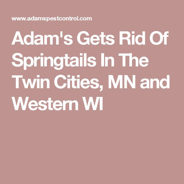 Adam's Gets Rid Of Springtails In The Twin Cities, MN and Western WI