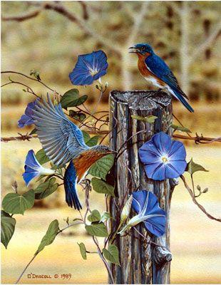 """Morning Glories"" (bluebirds) by Danny O'Driscoll, my new favorite bird artist"