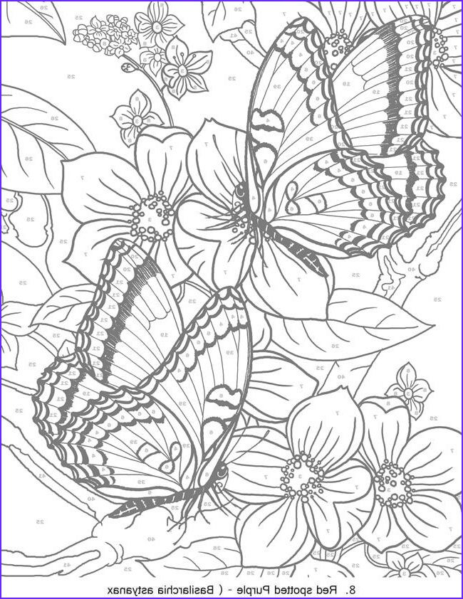 15 Awesome Color By Number Coloring Books For Adults Images Butterfly Coloring Page Coloring Pages Coloring Books