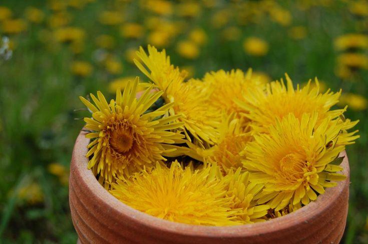 Právě nyní louky září žlutými pampeliškovými květy, není na co čekat. Vyrazte s košíčkem, nasbírejte si pampeliškové květy a uvařte si doma voňavý pampeliškový med. Skvěle s ním ochutíte třeba čaj, je báječný i pro přípravu medových dezertů. Třtinový cukr dodává medu jemně exotickou chuť. Máme pro vás ještě 2 tipy na netradiční přísady.