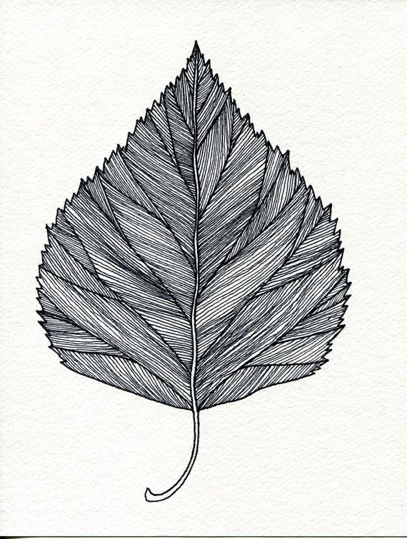 Birch Leaf Print of original pen and Ink drawing  by Bigbrainart, $22.00