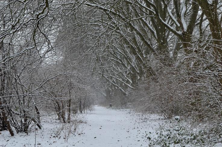 Wick woodland, Hackney