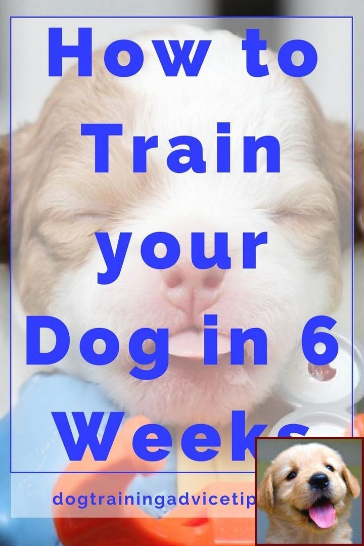House Training Outside Puppy And Clicker Training Dogs Amazon