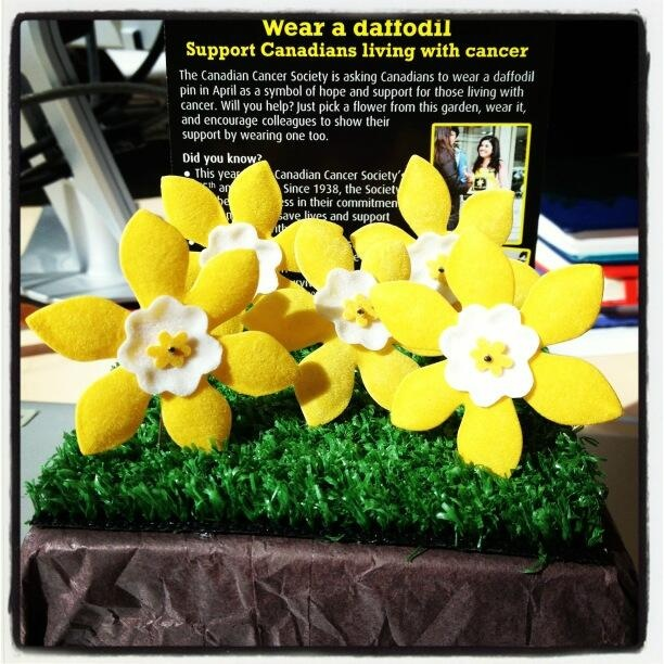 Wear a daffodil in April as a symbol of hope and support for those living with cancer. #daffodil #cancer