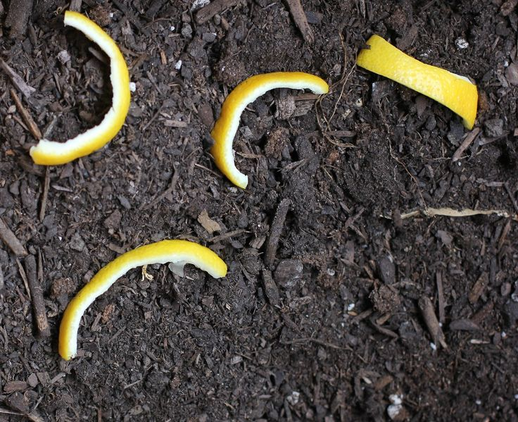 Use Lemon Peel to Deter Cats from Your Garden (from My Homestead Gallery)