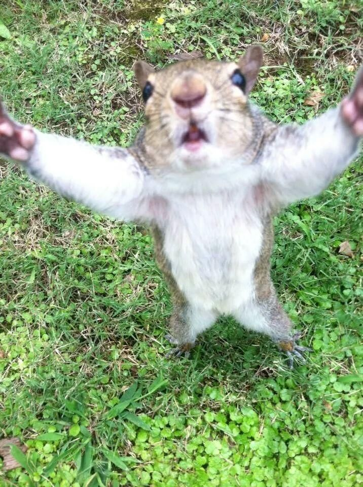 Family meets friendly squirrels on UNA's campus | WHNT.com ...