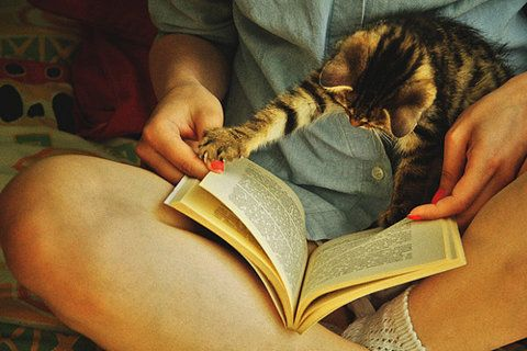//Book Club, Reading, Cat, Summer Book, Wait, Things, Kittens, Kitty, Animal