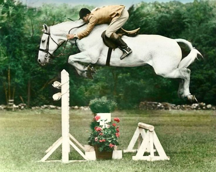 Anyone not know Snowman's story? An Amish country, PA, plowhorse was on a van to the slaughterhouse after failing to sell at a cheap horse auction. Harry de Leyer, there to pick up a hack for student lessons, arrived late; missing the sale. Noticing the 8 year old gray, Harry bought him for $80. Snowman was a lesson horse until Harry saw he could jump and started training. Two years from a plow - and death - Snowman was in Madison Square Garden and won the 1958 open show jumping Triple…