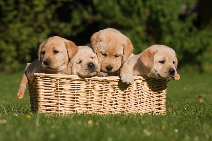 Życzymy Wam absolutnie udanego tygodnia! http://www.fototapeta24.pl/  #fototapeta #fototapeta24pl #pies #dogs #udanego #tygodnia #sweet