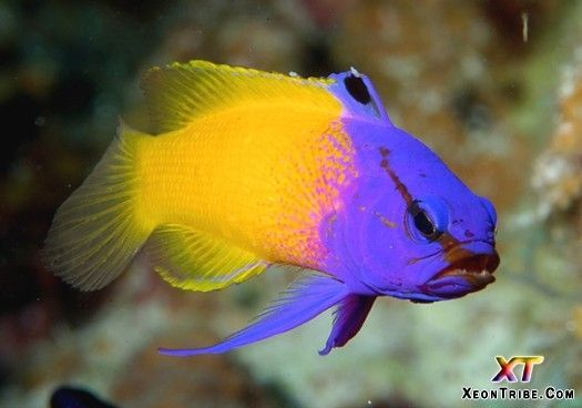 17 Best images about fish on Pinterest | Awesome tattoos ...
