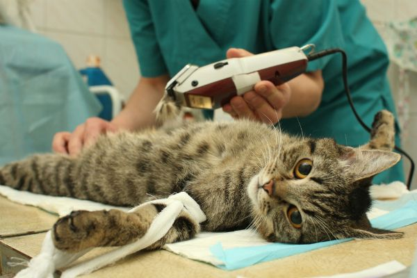 Blood Tests For Your Cats Are Essential