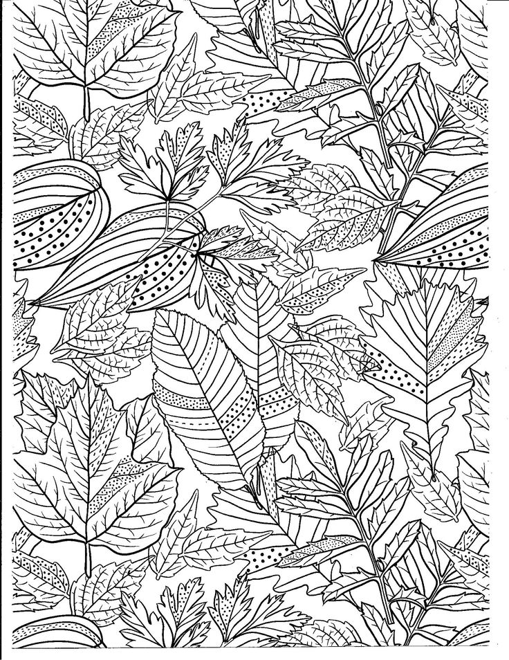 Natural Wonders Color Art Adult coloring pages, Coloring