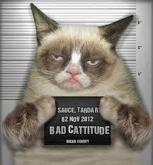 Lord vader moderado nivel 2 3fddb9b6c839fabcb7df2e7e38bd2523--grumpy-cat-image