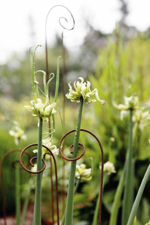 Tolle Idee für Einzelstängel-Blumen wie Allium!