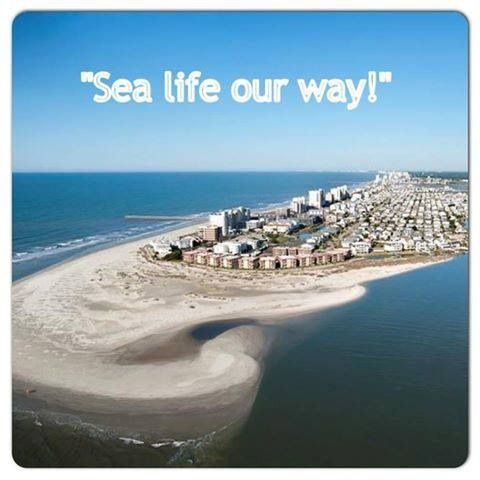 109 Best Vacation Myrtle Beach Georgetown Sc Images On Pinterest