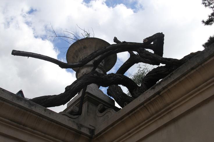 Square des arènes de Lutèce  Paris 5