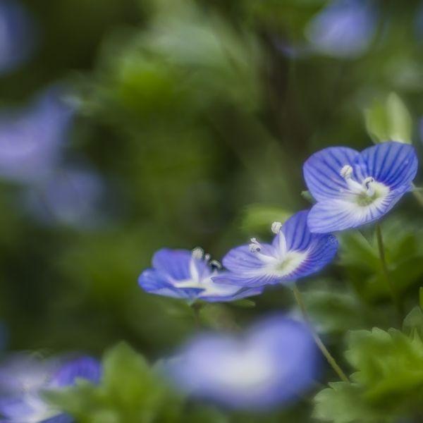 See Through Blue