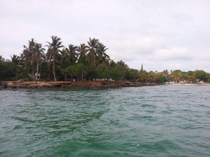 """Isla Fuerte - Colombia  / Junio 2014 / una Isla muy virgen aún,  ideal para descansar de las ciudades.   Representativo para conocer """"El árbol que camina"""",  es monumental su tamaño y la forma es que se va extendiendo horizontalmente."""