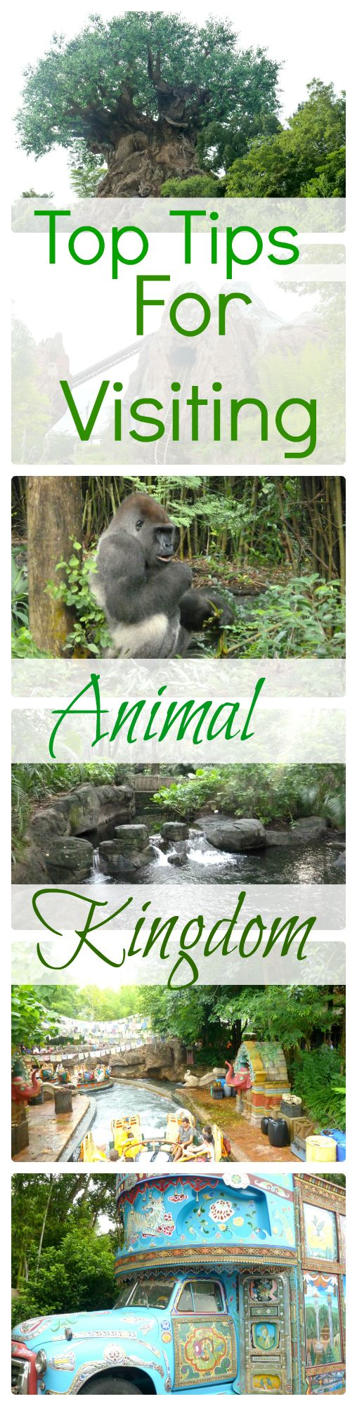 Top Tips for visiting Animal kingdom Walt Disney World