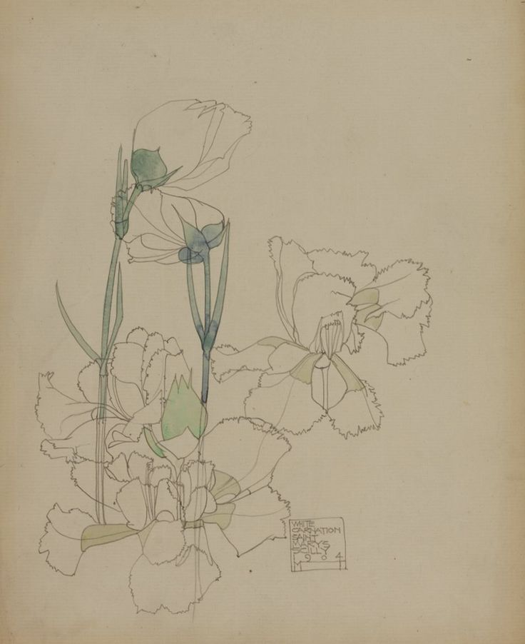 """Charles Rennie MacIntosh """"White Carnation, St Mary's, Scilly"""" 1904 Hunterian Art Gallery Mackintosh collections, catalogue number GLAHA 41445 (Scottish; 1868-1928) pencil and watercolour on paper Dimensions:25.7 x 20.2 Marks:s.d. and inscr. in pencil b.r. """"WHITE / CARNATION / SAINT / MARYS / SCILLY / 1904 / M T"""". Six flower studies are known from the Mackintoshes' visit to the Scilly Isles. This one shows the favourite garden plant, the Carnation."""