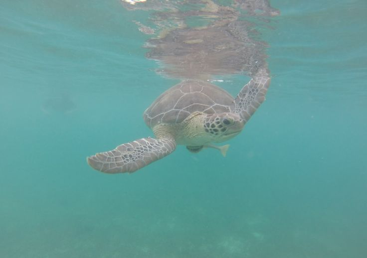 Swimming with turtles...