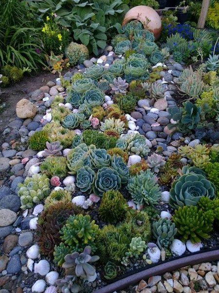 Succulent garden design is a growing trend that is…